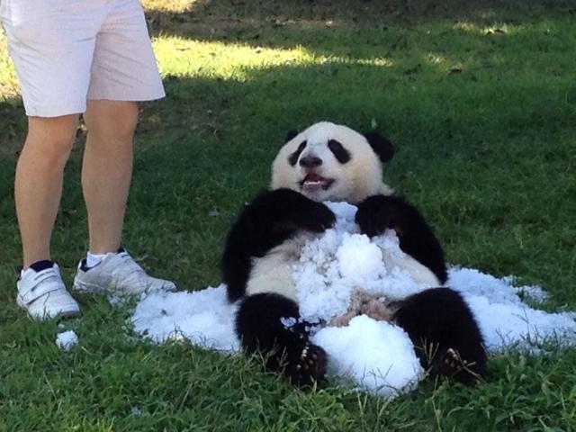 白浜のパンダ